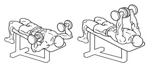 everkinetic bench press